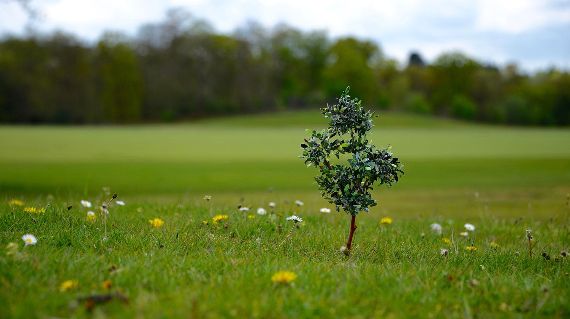 home tree1